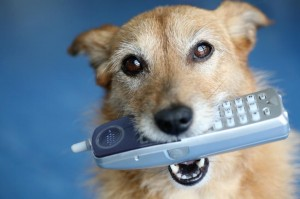Terrier Mix Dog Holding Phone in Mouth