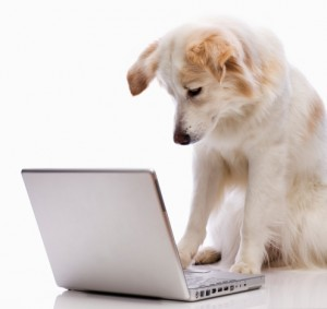Border Collie Researching on Computer