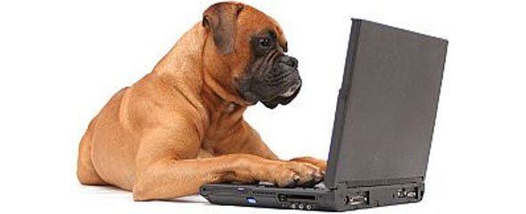 Boxer Researching on Computer