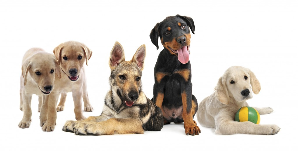 Group Of Dogs 40% of relinquished dogs